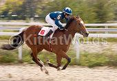 racehorse Image